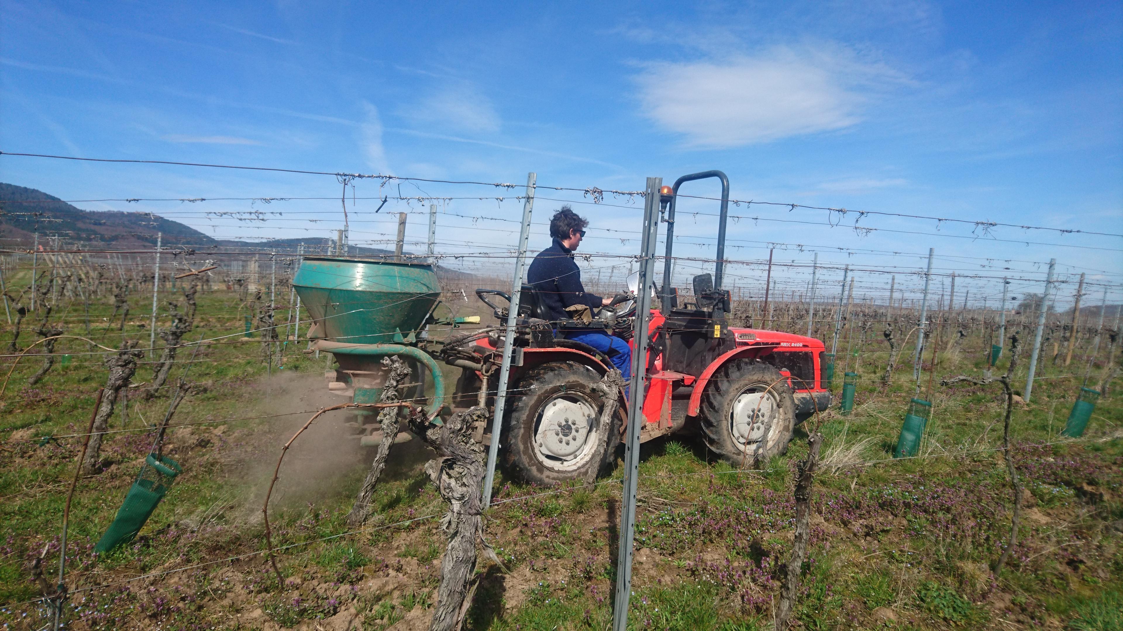 epandage-compost-domaine-gloeckler-brenner-alsace-vignerons