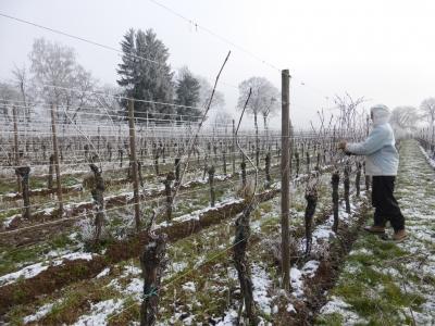 taille d'hiver janvier 2018 alsace neige