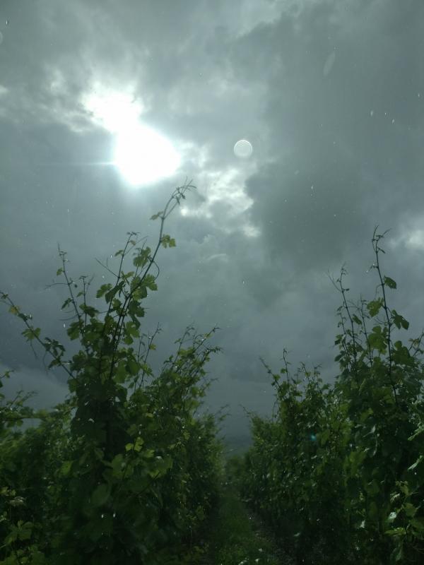 ciel-orage-vigne-domaine-gloeckler-brenner