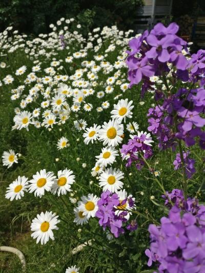 fleur-nature-alsace-gloeckler-brenner