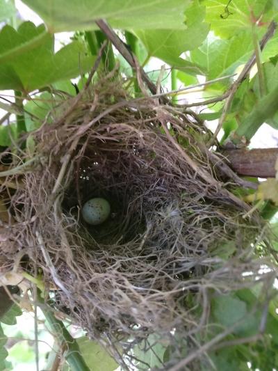 nid-oiseaux-nature-domaine-gloeckler-brenner-vignoble-alsace