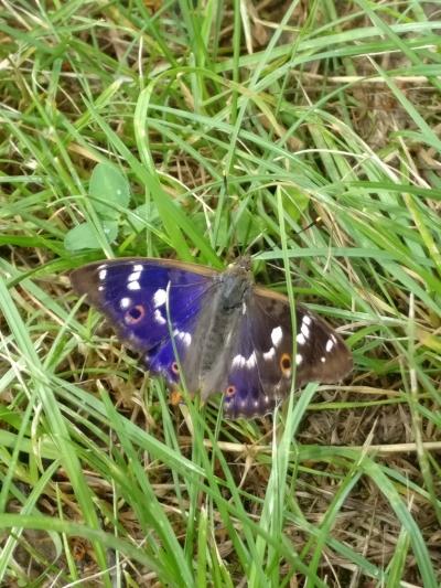 papillon-nature-domaine-gloeckler-brenner-alsace