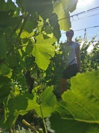 taille-en-vert-gloeckler-brenner-vignerons-independants