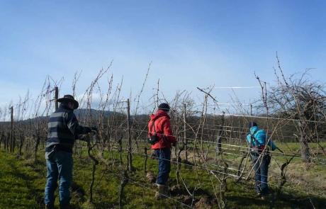 hiver-vigne-alsace-taille-des-vignes-gloeckler-brenner