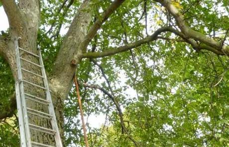 huile-de-noix-noyer-arbre-alsace-gloeckler-brenner
