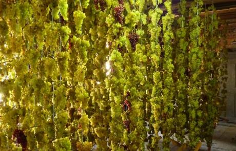muscat-sur-fil-maison-gloeckler-brenner-vigneron-alsace