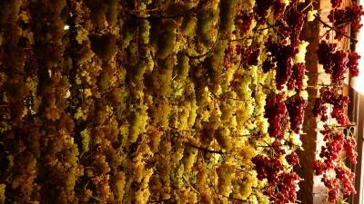 muscat-sur-fil-maison-gloeckler-brenner-vin-alsace