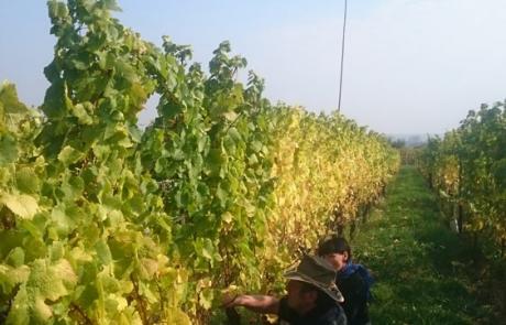 vignerons-alsace-gloeckler-brenner