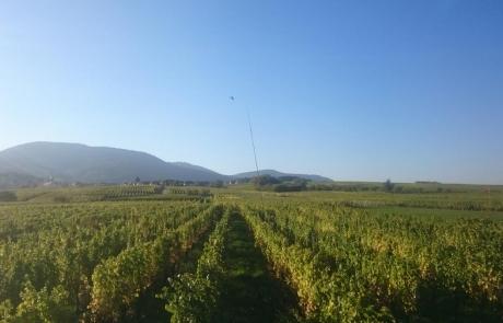 vignes-alsace-gloeckler-brenner-vigneron