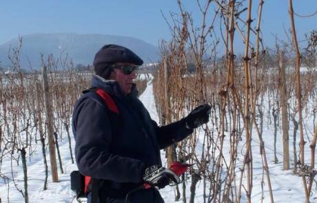 vignes-hiver-alsace-gloeckler-brenner-vigneron