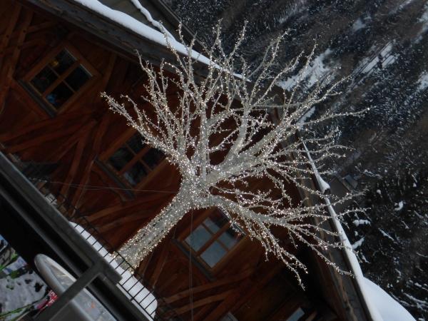 Voeux-2019-Maison-Gloeckler-Brenner-Vigneron-Alsace-arbre